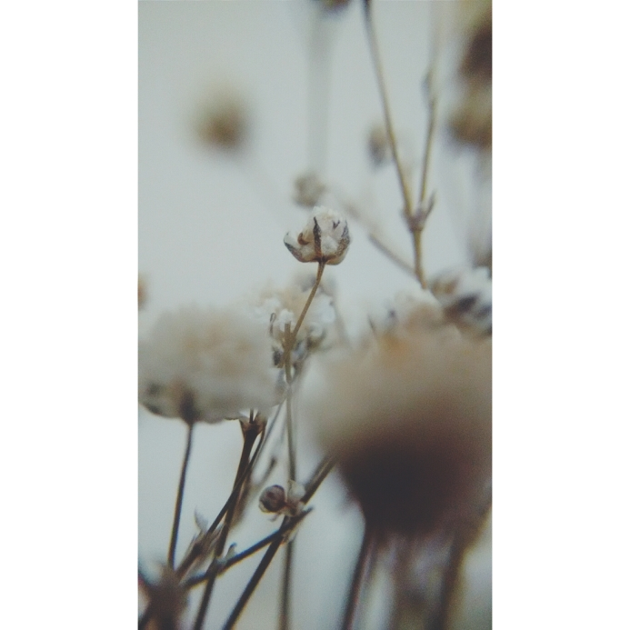 PhotoGrid_1449619806328